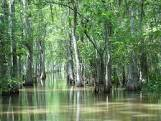 swamp images