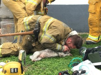 firefighter-dog1